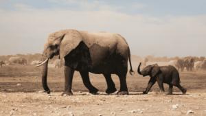 Olifanten groot klein - uitgelichte afbeelding