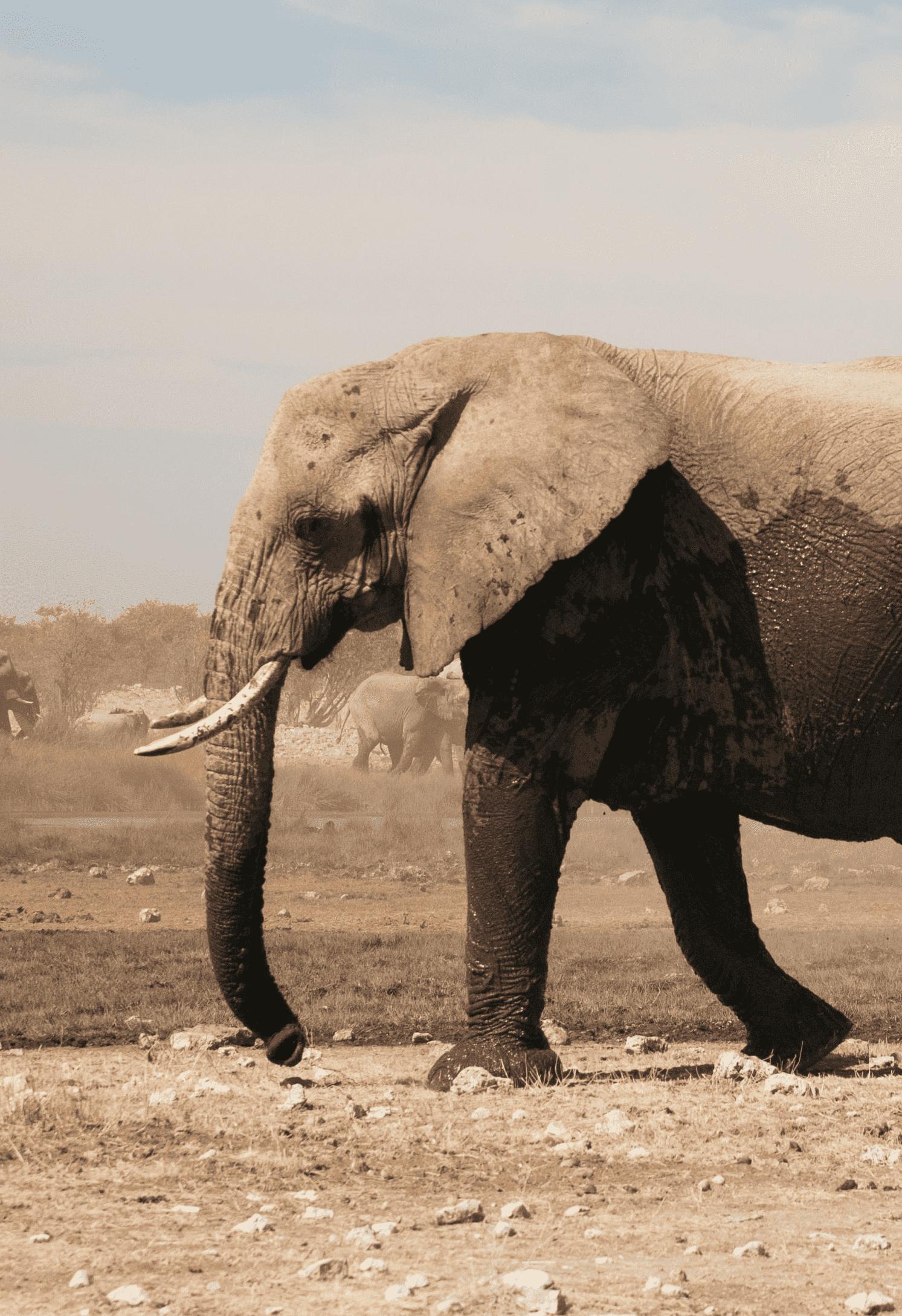 waarom olifanten jouw merk overnemen